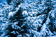 Assemblage Posters - Winter Snow Christmas Tree 10 Poster by Alexander Senin