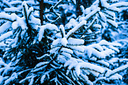 Assemblage Prints - Winter Snow Christmas Tree 11 Print by Alexander Senin