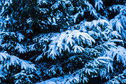 Assemblage Prints - Winter Snow Christmas Tree 4 Print by Alexander Senin