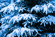 Assemblage Posters - Winter Snow Christmas Tree 6 Poster by Alexander Senin