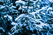 Assemblage Prints - Winter Snow Christmas Tree 7 Print by Alexander Senin