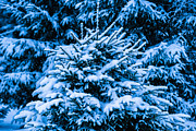 Assemblage Prints - Winter Snow Christmas Tree 8 Print by Alexander Senin
