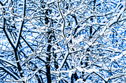 Assemblage Posters - Winter Snow Forest 11 Poster by Alexander Senin