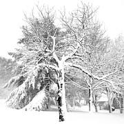 Patricia Sundik - Winter Snow Storm