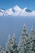 Frost Photos - Winter Snowscape Mountain And Evergreens by Anonymous