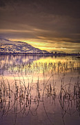 Lake Relections Prints - Winter Solstice 2 Print by Tara Turner