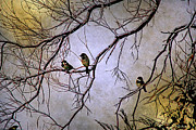 Winter Sparrow Dawn Print by Barbara Chichester