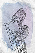 Sketch Digital Art - Winter Sparrows 1 by Betty LaRue