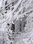 Snow Tree Prints Prints - Winter Storm-Snow Print by Beverly Livingstone