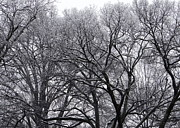 Tuscaloosa Photo Prints - Winter Storm Print by Vicki Tinnon