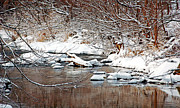 Winter Scenes Photos - Winter Stream by Brian Graybill