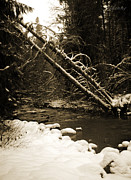 Mt Rainier Stream Framed Prints - Winter Stream in Sepia Framed Print by Chanda Henne