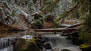 Stream Photos - Winter Stream by Mike Reid