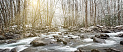 Great Smoky Mountains Prints - Winter Sun and Whitewater Print by William Britten
