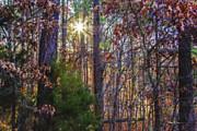 Barry Jones - Winter Sun