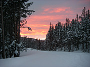 Winter Sunset Print by Jeanette French