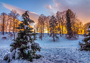 Evergreen Covered In Snow Posters - Winter Sunset Poster by Mark Papke