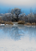 Daysray Photography Prints - Winter Taking Hold Print by Fran Riley