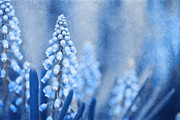 Textured Florals Prints - Winter Time Blues Print by Reflective Moments  Photography and Digital Art Images