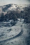 Mick Anderson - Winter Trail