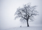Cold Posters - Winter tree and bench in fog Poster by Elena Elisseeva