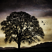 Stark Digital Art - Winter Tree and Ravens by Carol Leigh