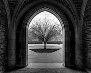 Emily Enz - Winter Tree at Duke...