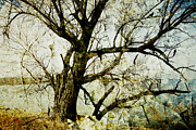 City Photography Digital Art - Winter Tree At The  Lake Shore  by Ann Powell