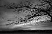 Joseph Duba Metal Prints - Winter Tree Canandaigua Lake 2013 Metal Print by Joseph Duba