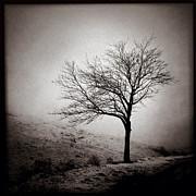 Winter Tree Print by David Bowman