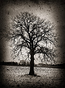 Oak Photos - Winter tree by Elena Elisseeva