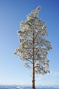 Snow Scene Pastels Metal Prints - Winter Tree Germany Metal Print by Francesco Emanuele Carucci