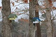 Paul SEQUENCE Ferguson             sequence dot net - Winter Tree House