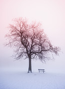 Snow Scene Landscape Framed Prints - Winter tree in fog at sunrise Framed Print by Elena Elisseeva