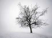 Snowy Tree Posters - Winter tree in fog Poster by Elena Elisseeva