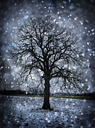 Snowy Evening Prints - Winter tree in snowfall Print by Elena Elisseeva