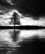 Flood Photo Prints - Winter Tree Light   Print by Tim Gainey