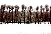 Snowed Trees Photo Metal Prints - Winter Tree Line 2 Metal Print by Xoanxo Cespon