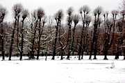 Snowed Trees Metal Prints - Winter Tree Line 3 Metal Print by Xoanxo Cespon
