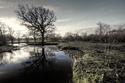 Culm Framed Prints - Winter tree on the River Culm Framed Print by Rob Hawkins
