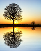 Winter Tree Reflections Print by Tim Gainey