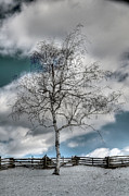 Split Rail Fence Photo Metal Prints - Winter Tree Metal Print by Todd Hostetter