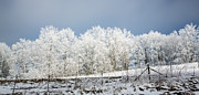 Winter Treeline Panorama Print by John Haldane