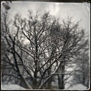 Deb Schmill - Winter Trees 2