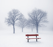 Stark Photos - Winter trees and bench in fog by Elena Elisseeva