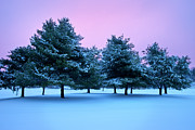 Snowy Night Night Photo Prints - Winter Trees Print by Brian Jannsen