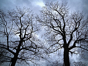Oak Photos - Winter trees by Elena Elisseeva
