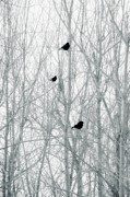Winter Crows Framed Prints - Winter Trees Framed Print by Gothicolors And Crows