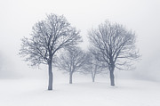 Winter Trees Photos - Winter trees in fog by Elena Elisseeva