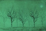 Business Digital Art - Winter Trees in the Mist by David Dehner